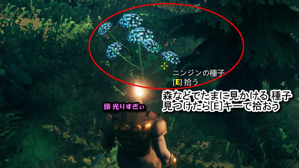 ニンジンの種子